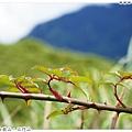 32_合歡山石門山