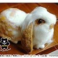 羊毛氈兔子_兔兔小朋友_05_felt rabbit