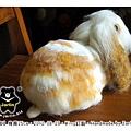 羊毛氈兔子_兔兔小朋友_04_felt rabbit