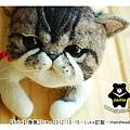 羊毛氈貓咪_felt cat_babe_01