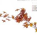 1211-C-1400x1050-京都楓葉2