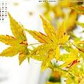 1211-C-1400x1050-京都楓葉3
