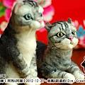 felt cat_羊毛氈貓咪x2_3