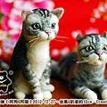 felt cat_羊毛氈貓咪x2_1