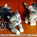felt cat_羊毛氈貓咪x2_9