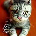 felt cat_羊毛氈貓咪x2_5
