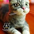 felt cat_羊毛氈貓咪x2_6