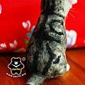 felt cat_羊毛氈貓咪x2_7