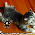 felt cat_羊毛氈貓咪x2_4