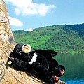 2013_小黑熊在花蓮3_鯉魚潭1