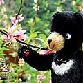 2013_小黑熊在花蓮6_布洛灣