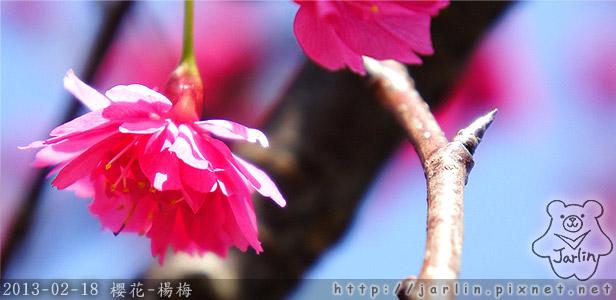00_櫻花