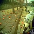 三月木棉花 (01)