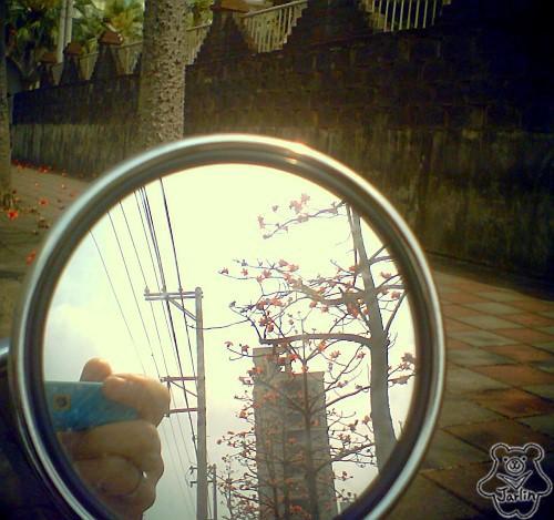 三月木棉花 (02)