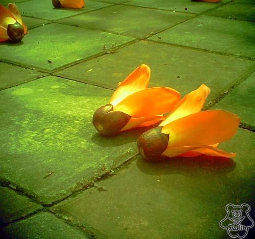 三月木棉花 (05)