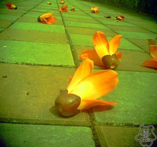 三月木棉花 (08)