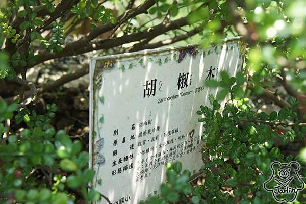 楊心國小 (44)