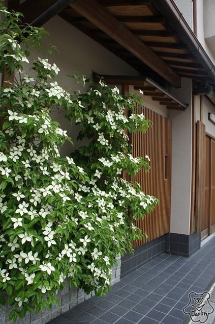 09_前往宇治上神社.JPG