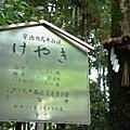 35_宇治上神社.JPG