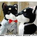 20130930_黑色柴犬婚禮組01