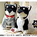 20130930_黑色柴犬婚禮組04