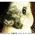 felt rabbit_羊毛氈兔子_皮皮1