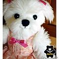 穿小花洋裝的馬爾濟斯kiki1_2