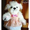 穿小花洋裝的馬爾濟斯kiki1_1
