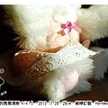 穿小花洋裝的馬爾濟斯kiki1_8