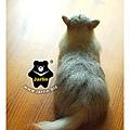 felt cat_羊毛氈貓咪_Jarlin4