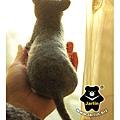 felt-cat羊毛氈貓_藍波斯6