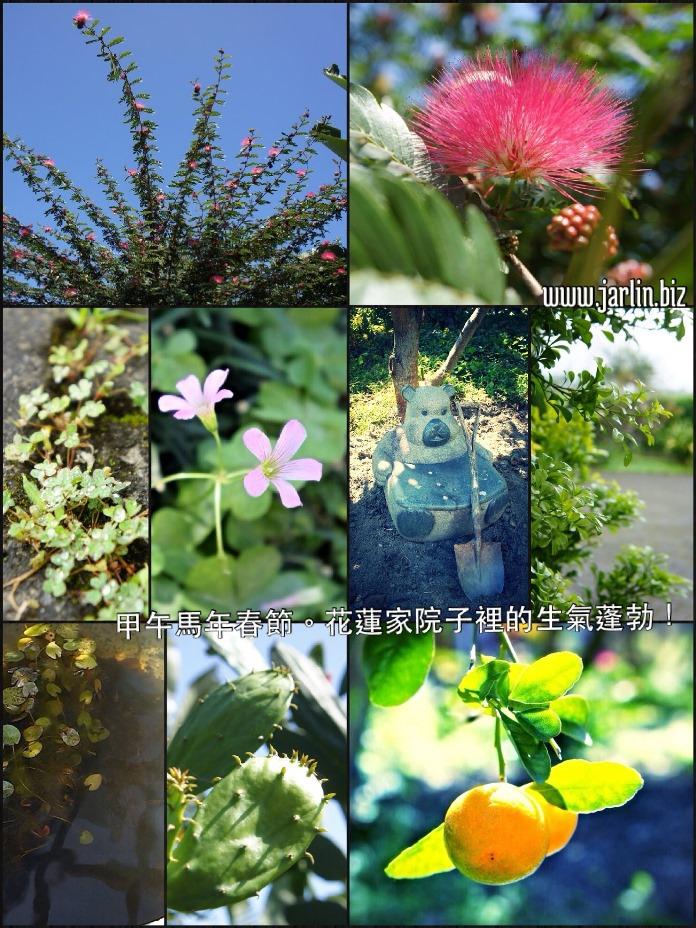 20140203_花園照