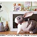 20140829_兔兔羊毛氈Jarlin01