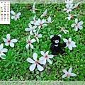 5月_1_迷你台灣黑熊