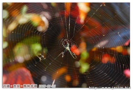美麗的蜘蛛網