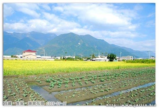 早上趁著天氣好,到附近油菜花田拍照