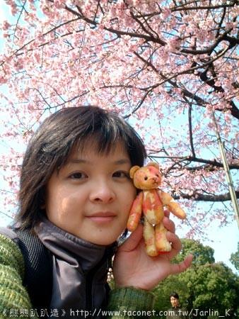 上野公園櫻花開