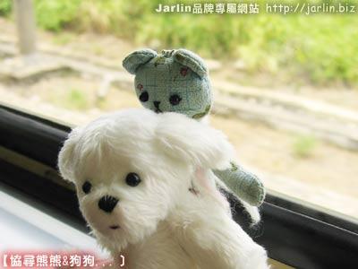 小馬爾濟斯姐姐背著Jarlin幸運熊