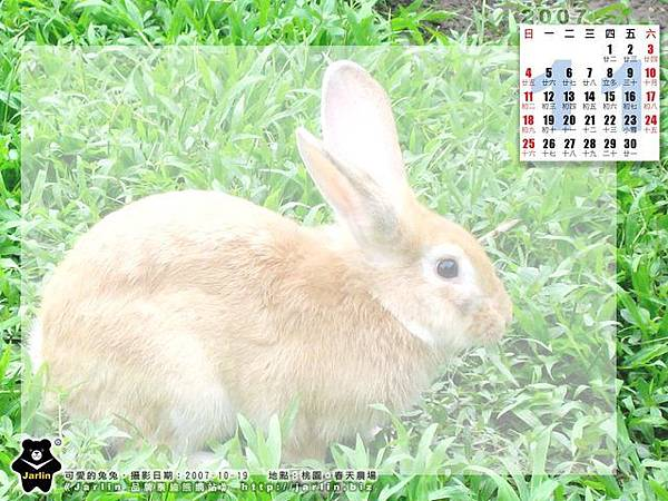 11 月_ 春天農場的兔兔
