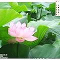 9月_上野公園的大蓮花