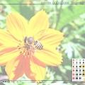 7月_蜜蜂採花蜜