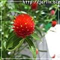 橫濱的小花