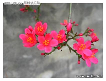紅通通的小花