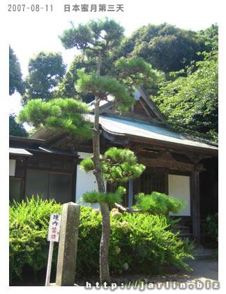 優雅的松樹