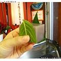 老闆問我們要現吃還是帶走,這是現吃的模樣,直接包著可愛的葉子