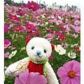 熊熊入花叢