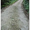 路上有一些飄落的桐花,時間還有點早,還見不到飄落滿地的五月雪