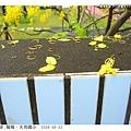 圍牆上有落花