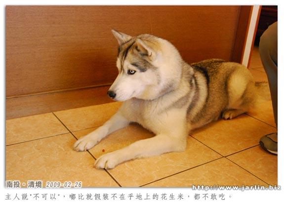 090226_清境 (24).jpg