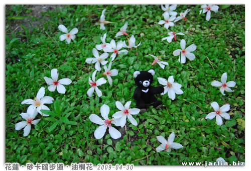 20090429_迷你台灣黑熊